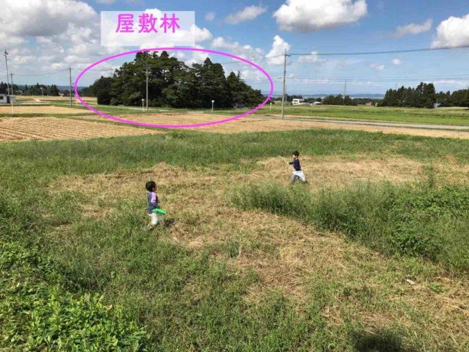 田んぼの中で屋敷林が点在する家の近所の写真