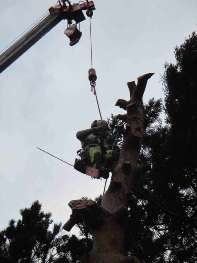木の伐採工事:職人さんの作業写真