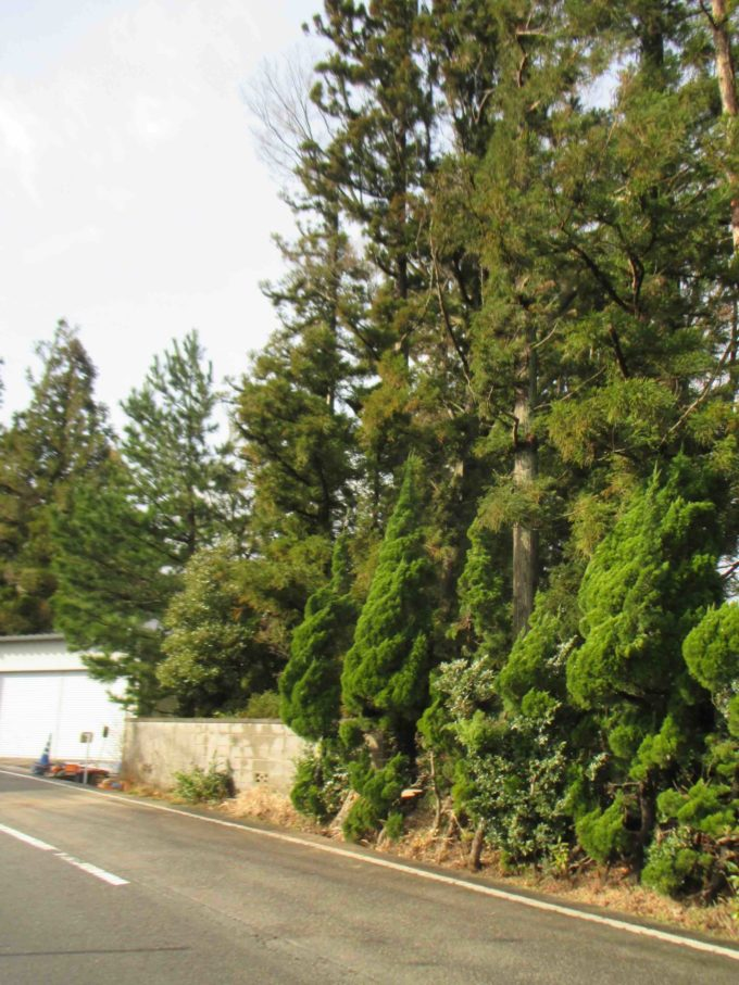 木の伐採後の道路の写真